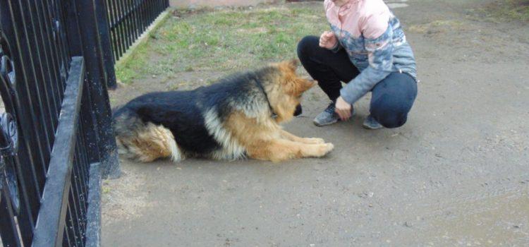 Ja i mój pies